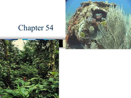Chapter 54 Ecosystems. n Ecosystem - consists of all the organisms living in a community as well as all the abiotic factors with which they interact.