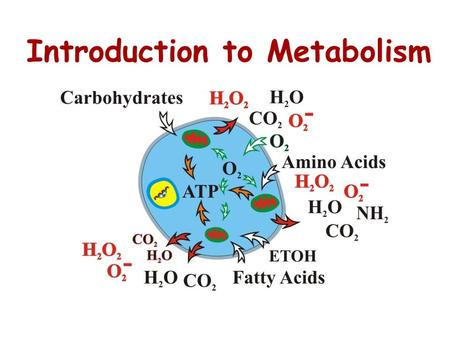 Introduction to Metabolism. Metabolism is the sum of an organisms chemical reactions Metabolism is an emergent property of life that arises from interactions.