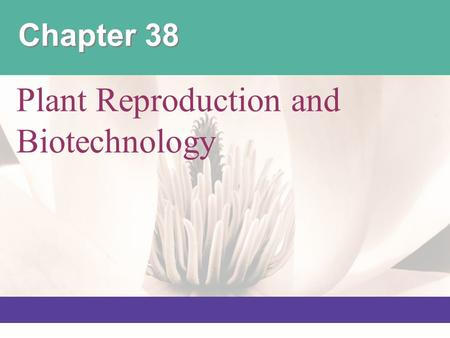 Chapter 38 Plant Reproduction and Biotechnology.