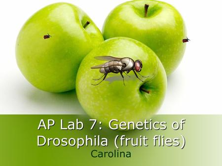AP Lab 7: Genetics of Drosophila (fruit flies) Carolina.