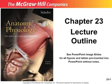 23-1 Chapter 23 Lecture Outline See PowerPoint Image Slides for all figures and tables pre-inserted into PowerPoint without notes. Copyright (c) The McGraw-Hill.