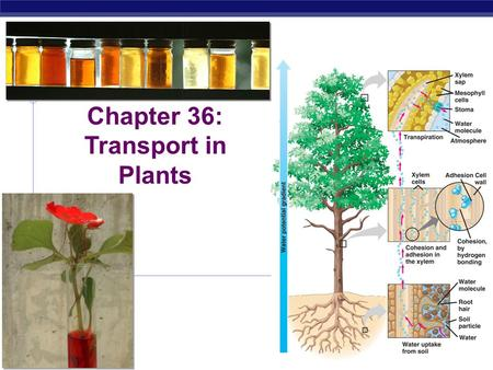 AP Biology 2011-2012 Chapter 36: Transport in Plants.