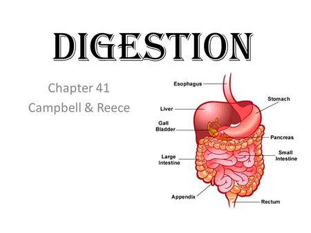 Digestion Chapter 41 Campbell & Reece. 49-1: Nutritional Requirements Cells need: Water Carbohydrates Lipids Proteins Nucleic acids Vitamins-- Study Table.