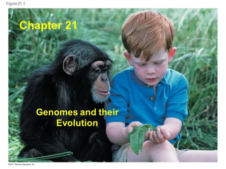 Copyright © 2005 Pearson Education, Inc. publishing as Benjamin Cummings Figure 21.1 Chapter 21 Genomes and their Evolution.