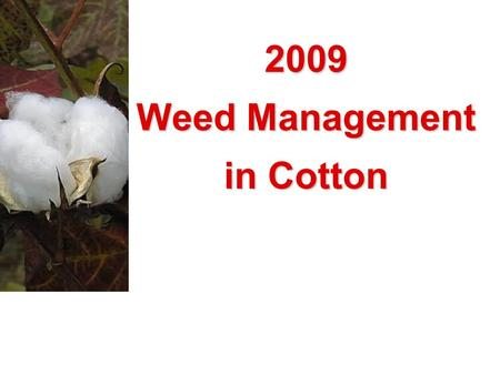 2009 Weed Management in Cotton. Getting Serious About Herbicide-Resistant Weeds.