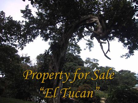 Property for Sale El Tucan. Blue Print The property is 10,902 Square meter. The road entrance for the property is part of the total extension. It has.