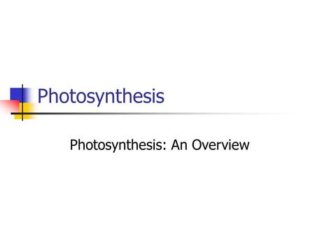Photosynthesis Photosynthesis: An Overview. Photosynthesis Plants use sunlight to convert water (H 2 O) and carbon dioxide (CO 2 ) into high energy carbohydrates,