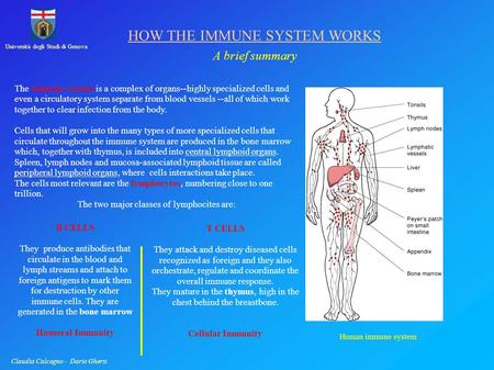Università degli Studi di Genova Claudia Calcagno - Dario Ghersi HOW THE IMMUNE SYSTEM WORKS A brief summary The immune system is a complex of organs--highly.