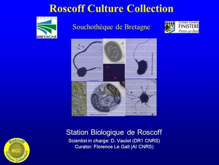 Roscoff Culture Collection Souchothèque de Bretagne Station Biologique de Roscoff Scientist in charge: D. Vaulot (DR1 CNRS) Curator: Florence Le Gall (AI.