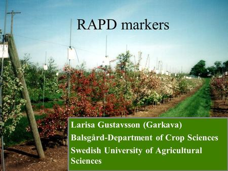 Larisa Gustavsson (Garkava) Balsgård-Department of Crop Sciences Swedish University of Agricultural Sciences RAPD markers.