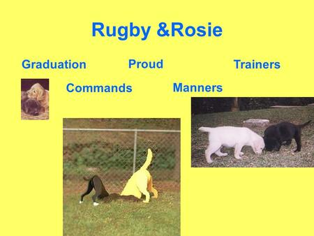 Rugby &Rosie Commands Manners Proud TrainersGraduation.