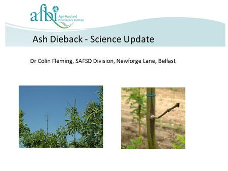 Ash Dieback - Science Update Dr Colin Fleming, SAFSD Division, Newforge Lane, Belfast.
