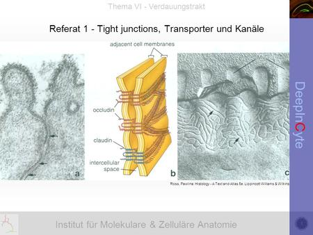Referat 1 - Tight junctions, Transporter und Kanäle