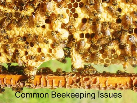 Common Beekeeping Issues. Presentations online Before you take copious notes, all these presentations are online here: