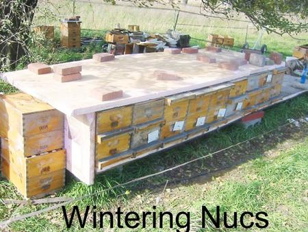 Wintering Nucs. Why Overwinter Nucs? To have local queens in the spring To make up losses from winter To make increase To sell nucs in the spring.