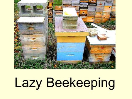 Lazy Beekeeping. Presentations online Before you take copious notes, all these presentations are online here: