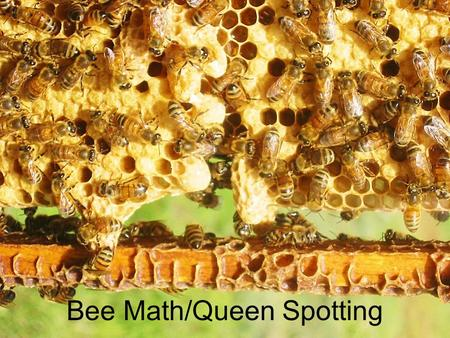 Bee Math/Queen Spotting. Presentations online Before you take copious notes, all these presentations are online here: