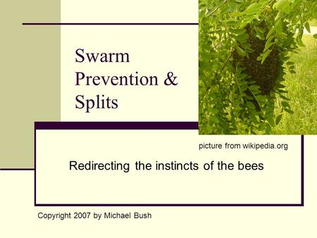 Swarm Prevention & Splits Redirecting the instincts of the bees Copyright 2007 by Michael Bush picture from wikipedia.org.