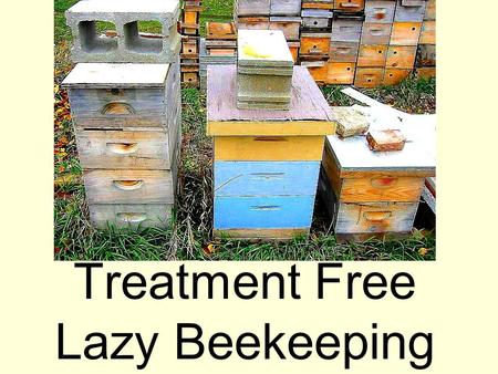 Treatment Free Lazy Beekeeping. The Master The Master accomplishes more and more by doing less and less until finally he accomplishes everything by doing.