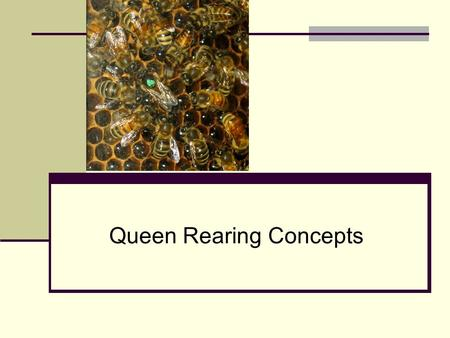 Queen Rearing Concepts. Why rear your own queens? Cost Time Availability Mite and Disease Resistance AHB Acclimatized Bees Quality.