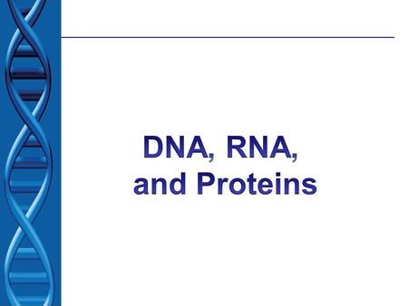 DNA and Protein Synthesis DNA contains the genetic information to make amino acids Amino acids combine to make proteins These proteins determine the physical.