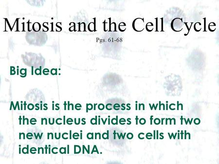 1 1 Mitosis and the Cell Cycle Pgs. 61-68 Big Idea: Mitosis is the process in which the nucleus divides to form two new nuclei and two cells with identical.