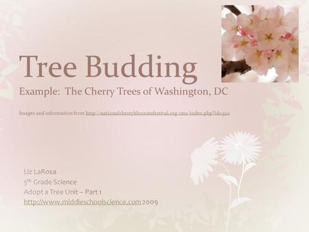 Tree Budding Example: The Cherry Trees of Washington, DC Images and information from http://nationalcherryblossomfestival.org/cms/index.php?id=390 Liz.