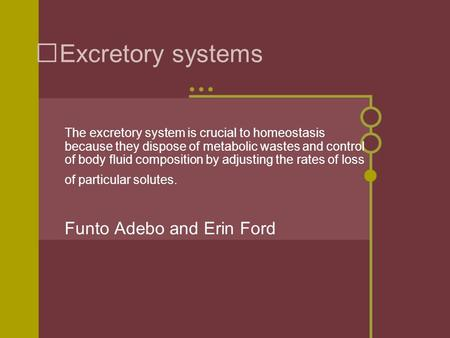 Excretory systems The excretory system is crucial to homeostasis because they dispose of metabolic wastes and control of body fluid composition by adjusting.