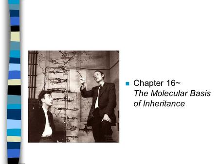 N Chapter 16~ The Molecular Basis of Inheritance.
