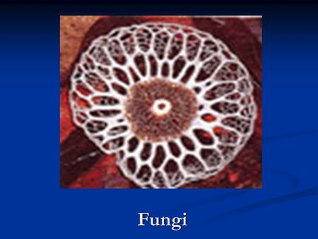 Fungi. Fungi are eukaryotic heterotrophs that digest food externally and absorb the the digested materials through their body walls. Fungi are eukaryotic.