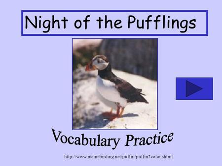 Night of the Pufflings