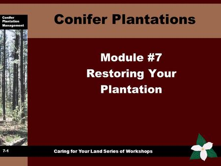 Conifer Plantations Module #7 Restoring Your Plantation 7-1.