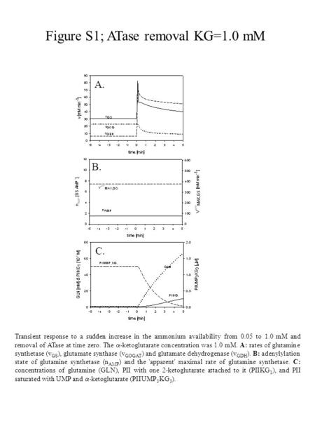 Figure S1; ATase removal KG=1.0 mM Transient response to a sudden increase in the ammonium availability from 0.05 to 1.0 mM and removal of ATase at time.