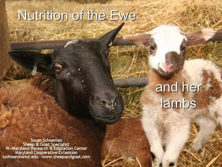 Nutrition of the Ewe and her lambs Susan Schoenian Sheep & Goat Specialist W. Maryland Research & Education Center Maryland Cooperative Extension