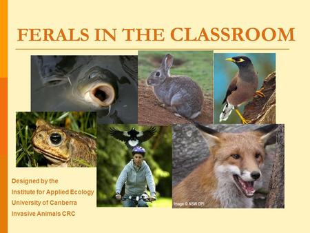 FERALS IN THE CLASSROOM Designed by the Institute for Applied Ecology University of Canberra Invasive Animals CRC.