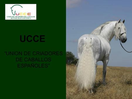 UCCE UNION DE CRIADORES DE CABALLOS ESPAÑOLES. BUSINESS MENTALITY IN THE MANAGEMENT OF UCCE Shareholder Board of Directors Managers Customers Breeder.