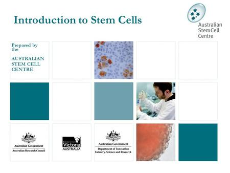 Prepared by the AUSTRALIAN STEM CELL CENTRE Introduction to Stem Cells.