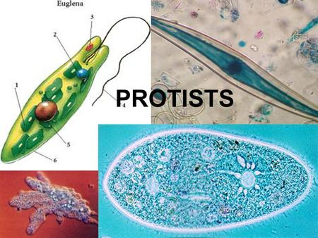PROTISTS. YOU MUST KNOW… SOME DON'T CLASSIFY PROTISTS AS A KINGDOM HOW CHLOROPLASTS AND MITOCHONDRIA EVOLVED THROUGH ENDOSYMBIOSIS.
