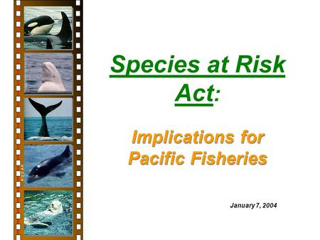 Species at Risk Act : K O D A K January 7, 2004 Implications for Pacific Fisheries.