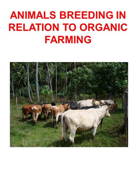 ANIMALS BREEDING IN RELATION TO ORGANIC FARMING. HISTORY Polynésians were great navigators.During migrations they broutht animals with them.