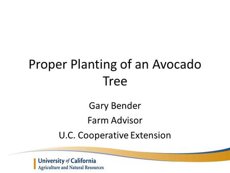 Proper Planting of an Avocado Tree Gary Bender Farm Advisor U.C. Cooperative Extension.