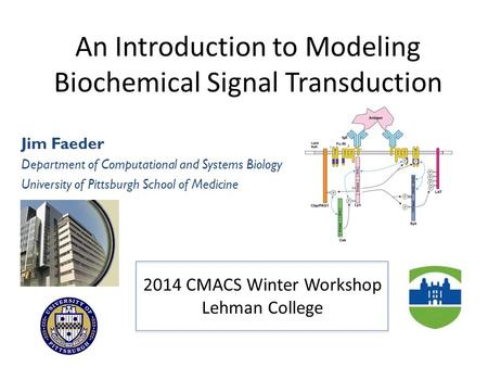 An Introduction to Modeling Biochemical Signal Transduction Jim Faeder Department of Computational and Systems Biology University of Pittsburgh School.