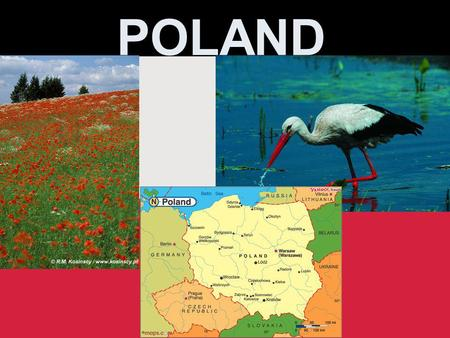 POLAND. National symbols Symbole narodowe The Coat of arms of Poland consists of a white eagle on a red field. Its current appearance, regulated by the.
