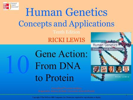 Gene Expression The human genome contains about 20,325 protein-encoding genes - However, this represents only a small part of the genome Much of the human.