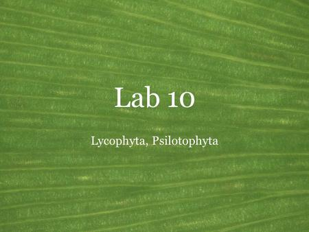 Lab 10 Lycophyta, Psilotophyta. Vascular plants General features of the land plants Common name: Vascular plants Synonyms: Tracheophyta Growth habit: