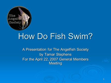 1 How Do Fish Swim? A Presentation for The Angelfish Society by Tamar Stephens For the April 22, 2007 General Members Meeting.