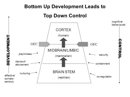 Bottom Up Development Leads to Top Down Control CORTEX (human) MIDBRAIN/LIMBIC (mammalian) BRAIN STEM (reptilian) OFC DEVELOPMENT CONTROL nurturing playfulness.