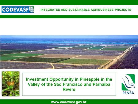1 www.codevasf.gov.br Investment Opportunity in Pineapple in the Valley of the São Francisco and Parnaíba Rivers INTEGRATED AND SUSTAINABLE AGRIBUSINESS.