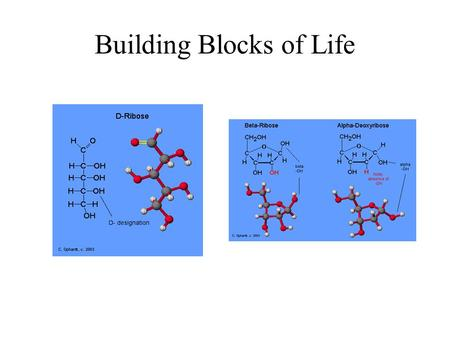 Building Blocks of Life. Most Important Chemical Consideration of Sugars Consider the anomeric carbon! The aldehyde on the one position can be nucleophilically.