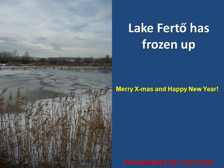 Lake Fertő has frozen up Photographed by: Ivan Szedo Merry X-mas and Happy New Year!